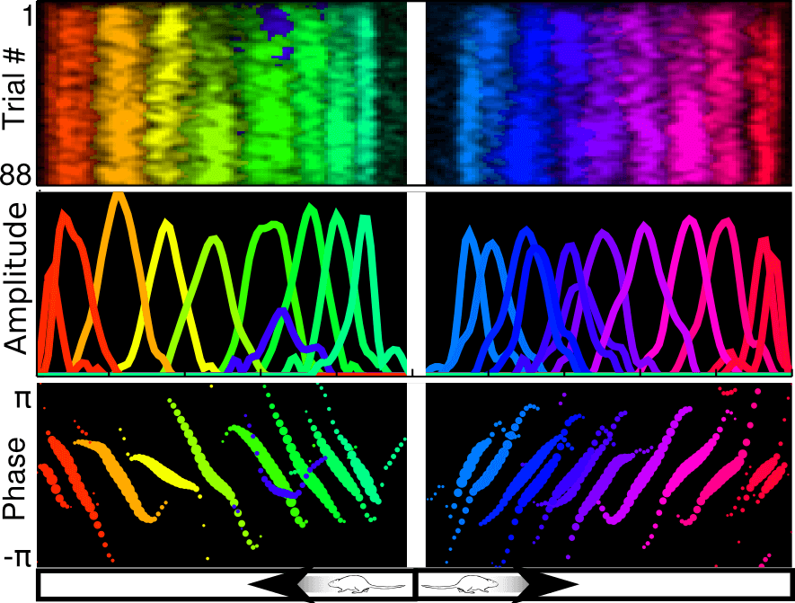 Electrical signals are recorded from the hippocampus of a moving rat as it runs back and forth on a linear track. Scientists found that at each point of the track, specific patterns of electrical activity emerge. In this figure, the activity of each pattern is rendered in a different color. Together, these patterns define a 'map' of the environment that specifies the rat's current location.